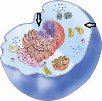 History of the Development of Cell Biology